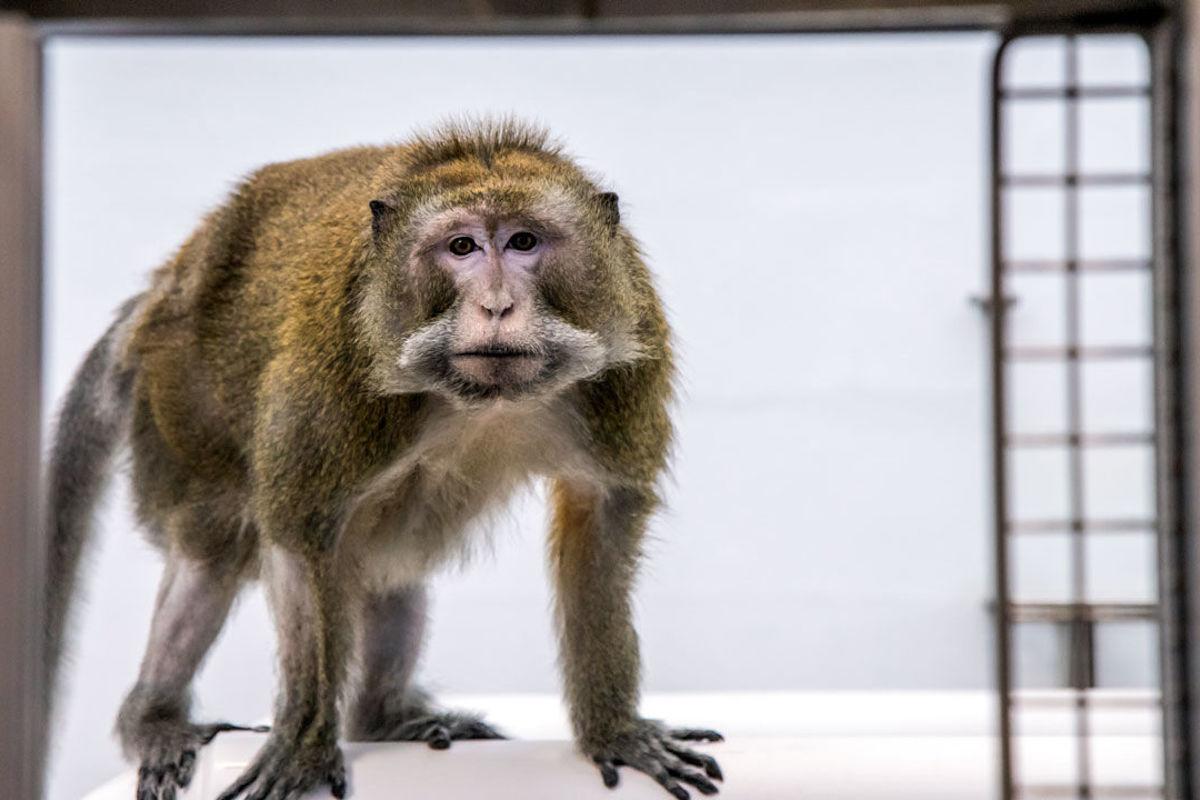 Todos los monos de la NASA fueron sacrificados en un solo día