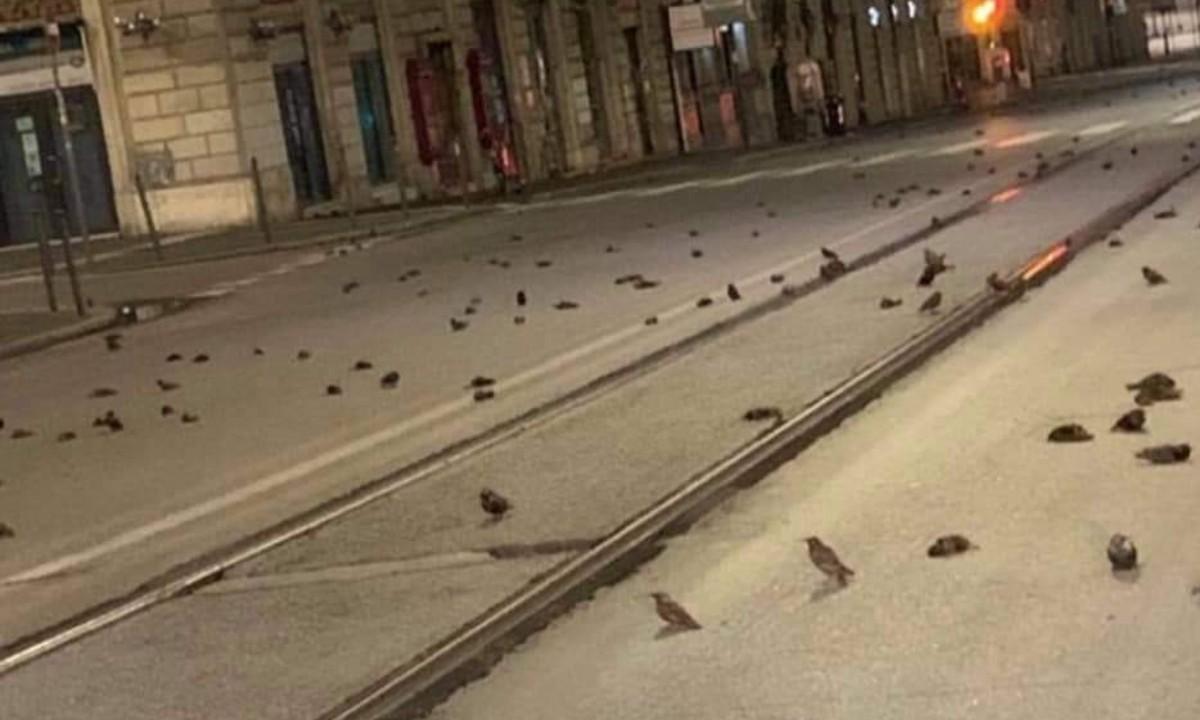 Mueren aves a causa de fuegos artificiales lanzados en Año Nuevo