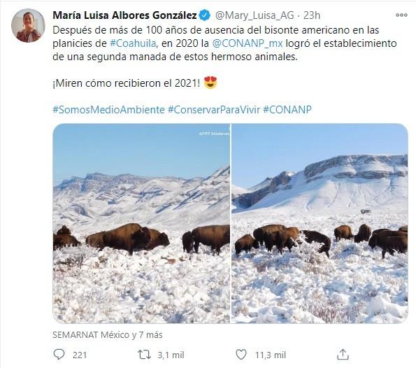 Tuit Semarnat bisonte americano