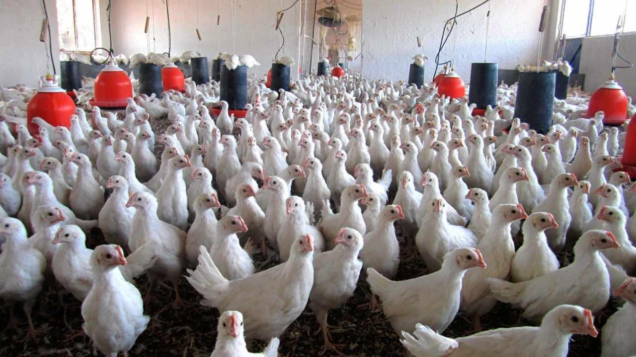 Rusia gripe aviar