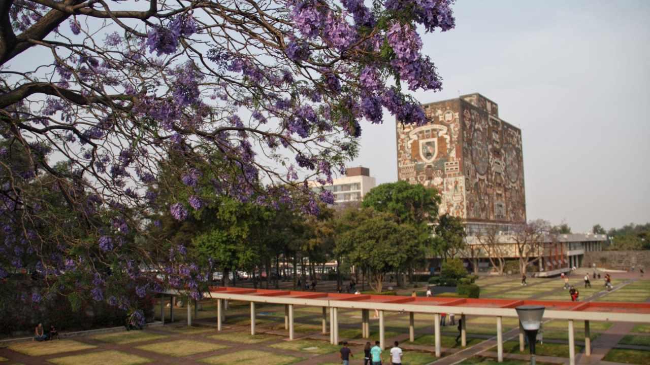 Carreras demanda UNAM