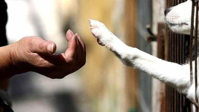cómo denunciar caso de maltrato animal CDMX