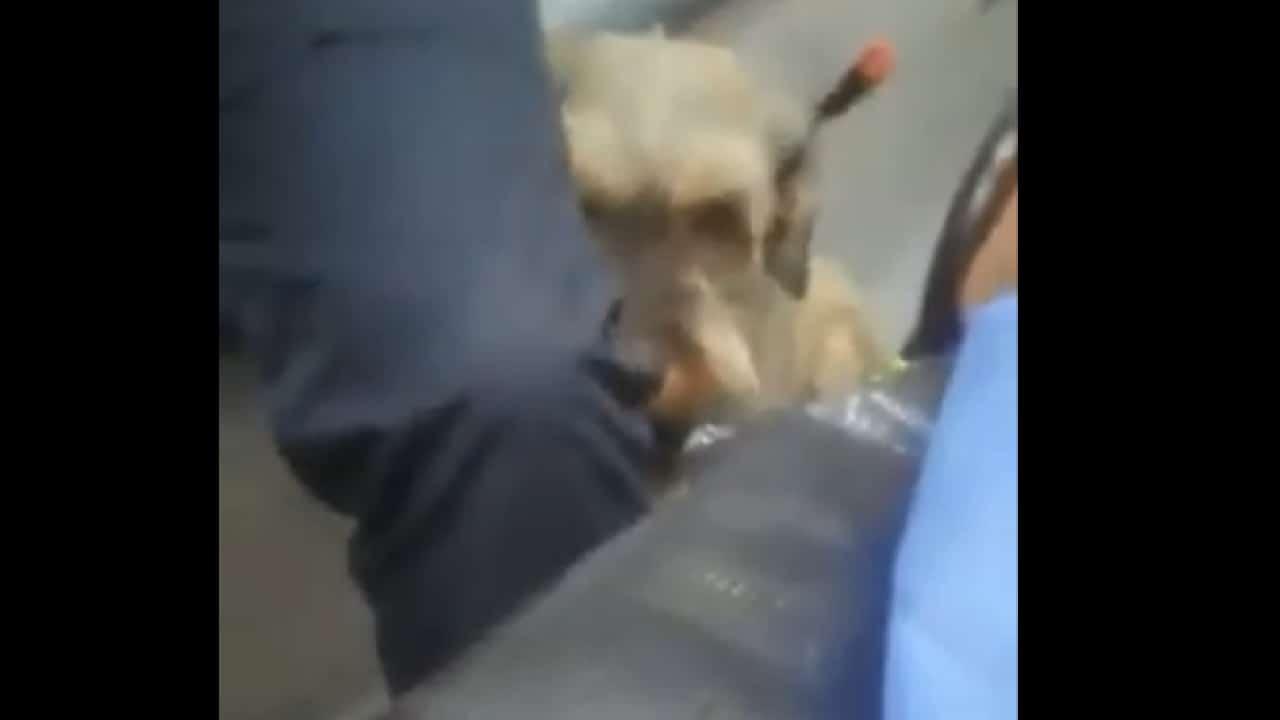 Perrito persiguio ambulancia en Iztapalapa