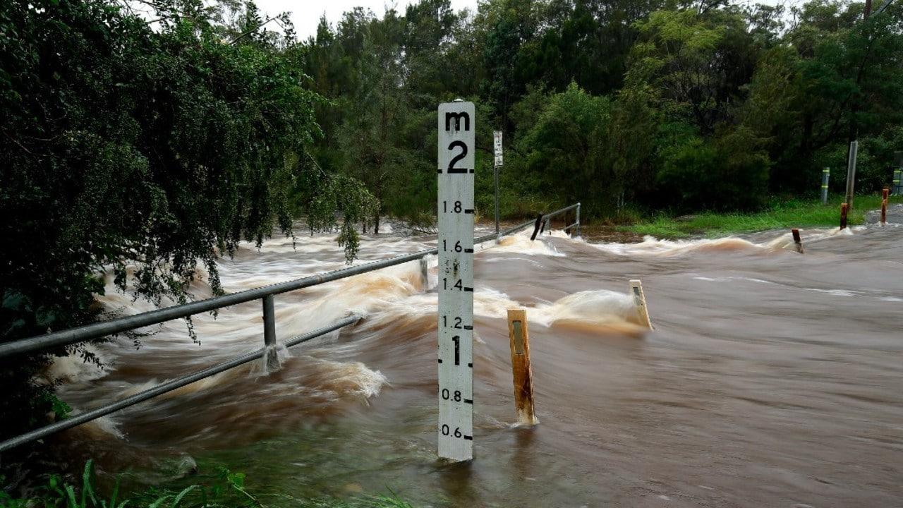 Arañas Huyen Inundaciones Australia Refugian Casas
