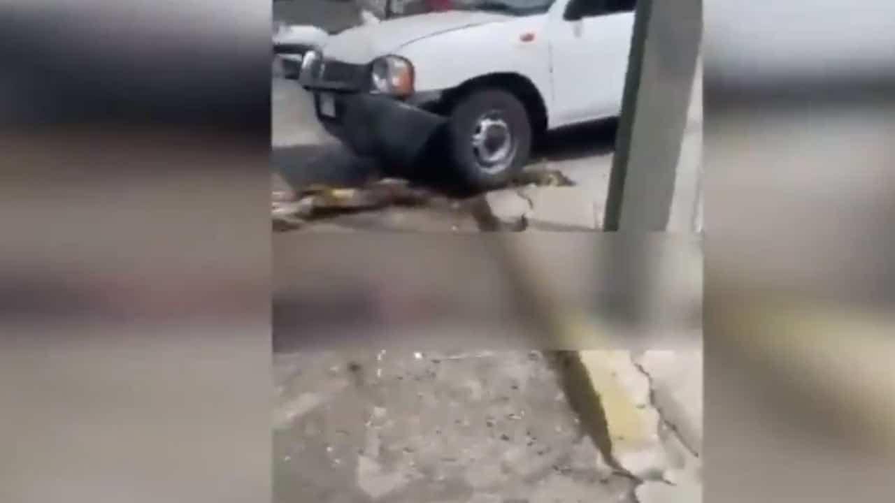 Video Jalisco atropella ladrones