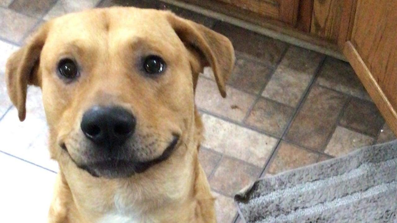 Tu perro puede sonreír