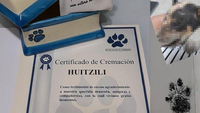 Menores de edad quemaron a Huitzilli un cachorro