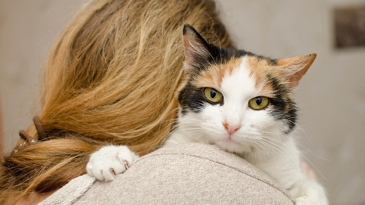 Mujer fue comida por sus gatos