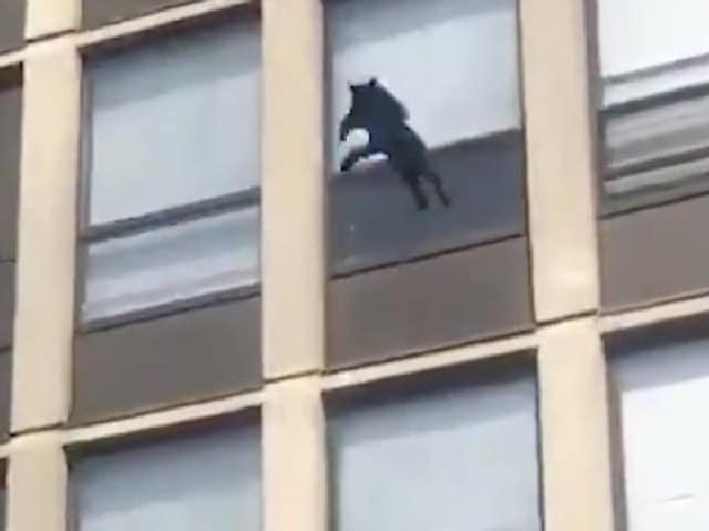 Video Gato Brinca Cinco Pisos Incendio Chicago