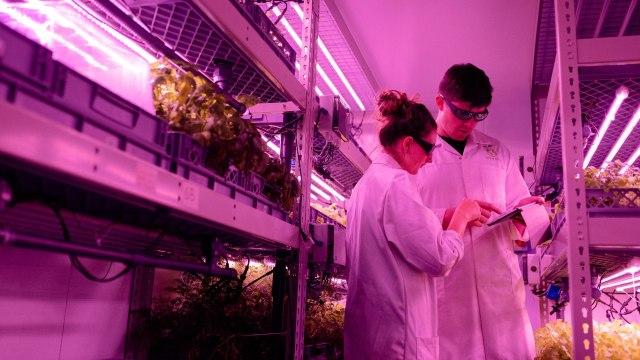 experimentos científicos sin ética
