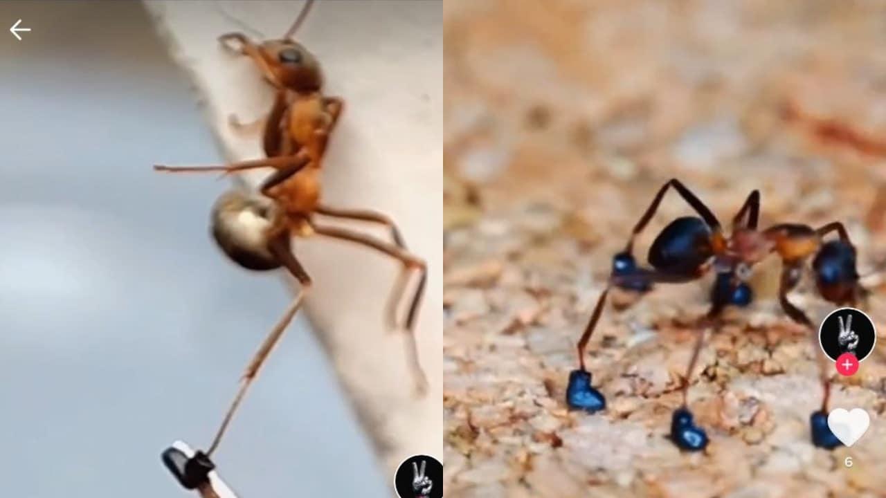 zapatos para hormigas