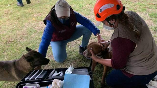 Adopcion perrito Spike rescatados del socavon de Puebla