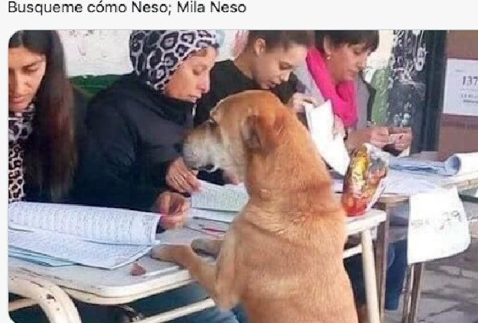 Elecciones 2021 Firu Lais Perro que votó