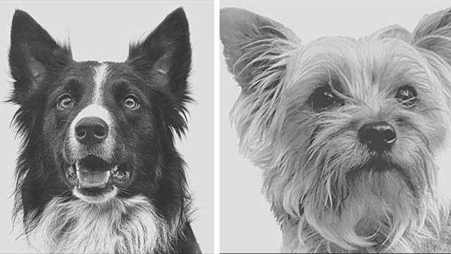 envenenan perros rescate Querétaro