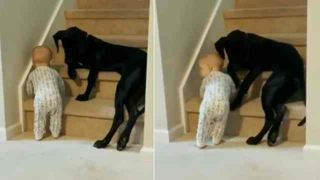 perro protege bebé viral video