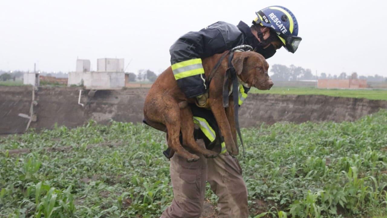 Video rescate perritos socavon Puebla