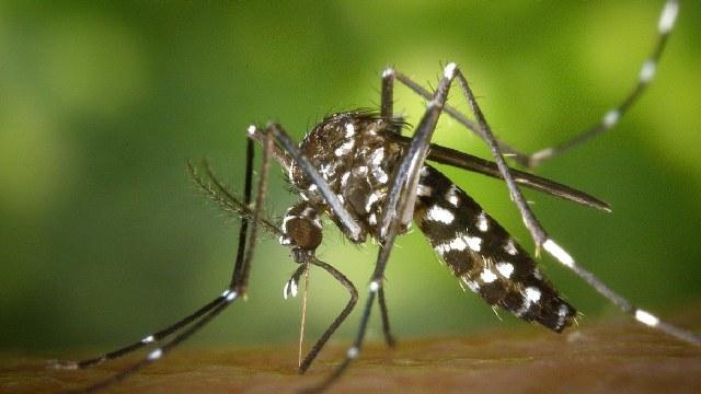 Insectos portan enfermedad que paraliza a los humanos