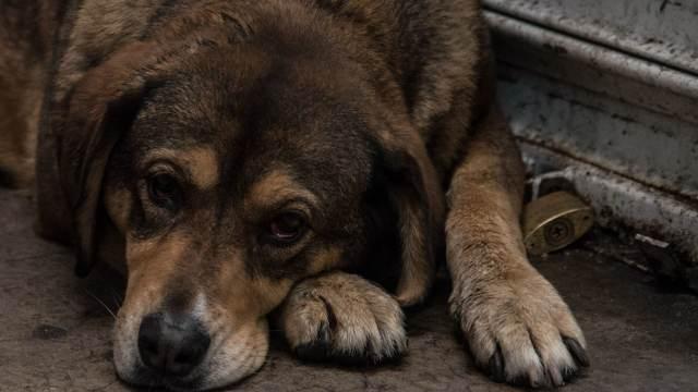 Se endurecen penas; hasta 9 años de prisión a quien maltrate animales