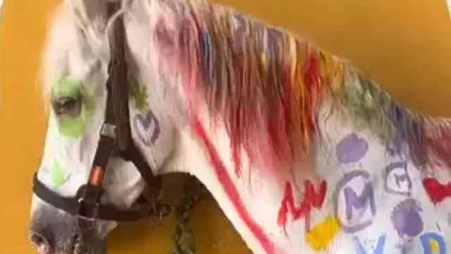 Niños pintan caballo y son señalados por maltrato animal