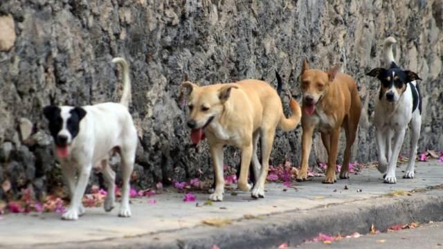 Jauría de perros da muerte a hombre en Edomex