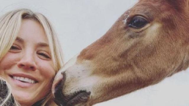 Kaley Cuoco ofrece comprar caballo maltratado
