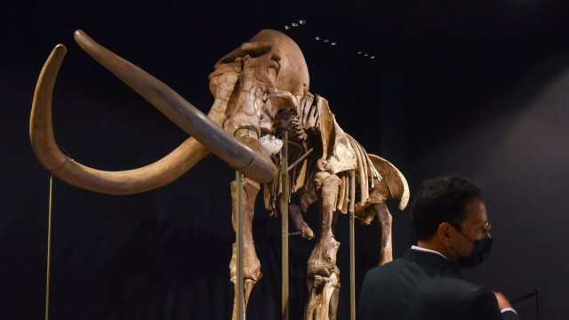 buscan desextiguir al mamut para combatir calentamiento global
