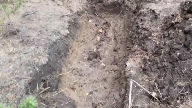 Padre obliga a pedófilo a cavar su tumba por abusar de su hija; era su mejor amigo