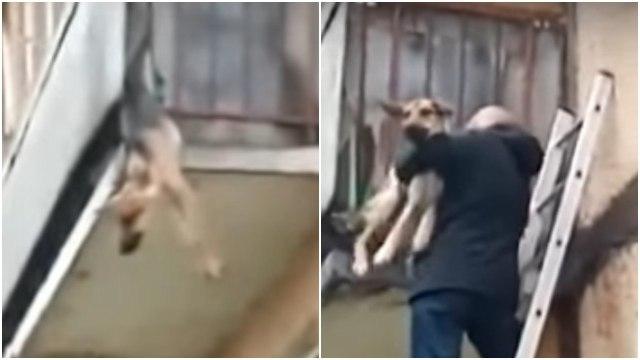 Perrita es rescatada de su dueño abusivo; colgaba de un balcón porque quería escapar