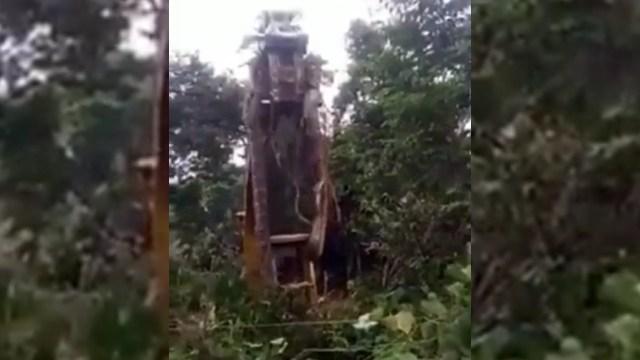 """Video: """"Eso parece un récord mundial"""": levantan a la serpiente más grande del mundo con grúa"""