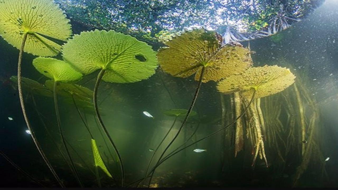 Científicos descubren manglares en México y Guatemala