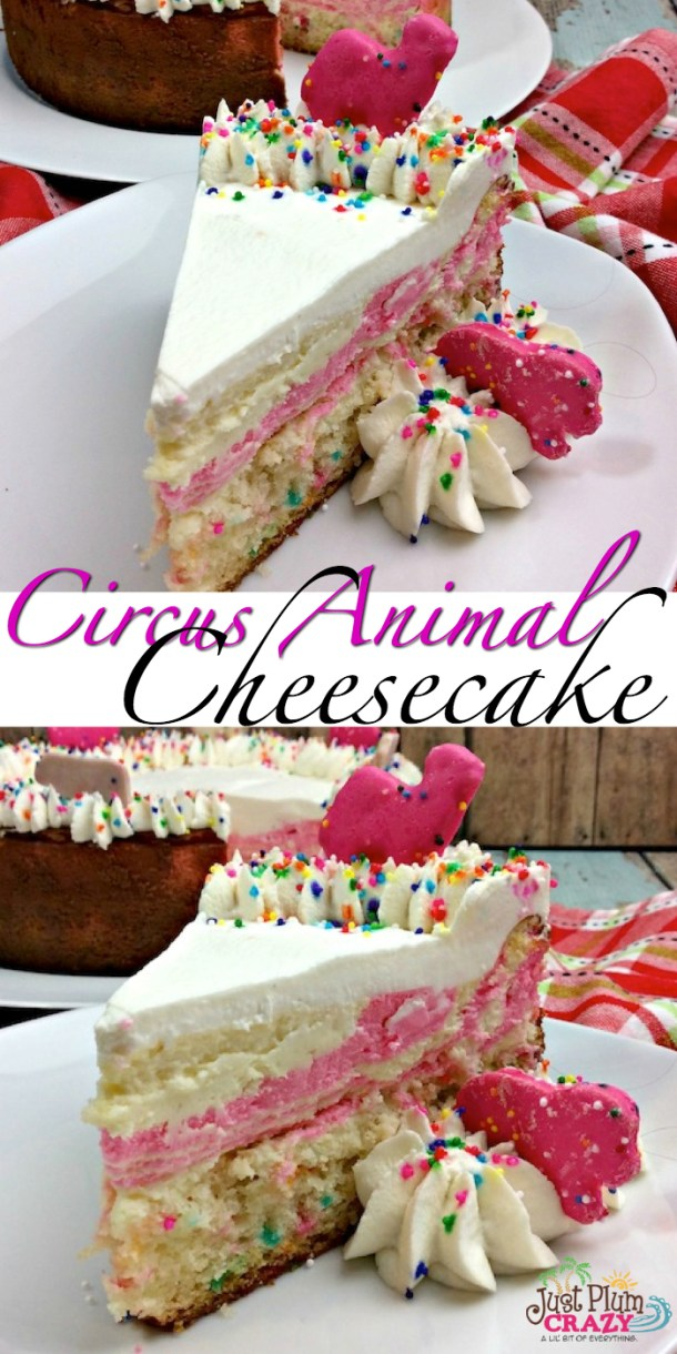 It's here! National Cheesecake Day! From plain Jane to downright fancy, like our Circus Animal Cheesecake Recipe, there is a cheesecake recipe for everyone.