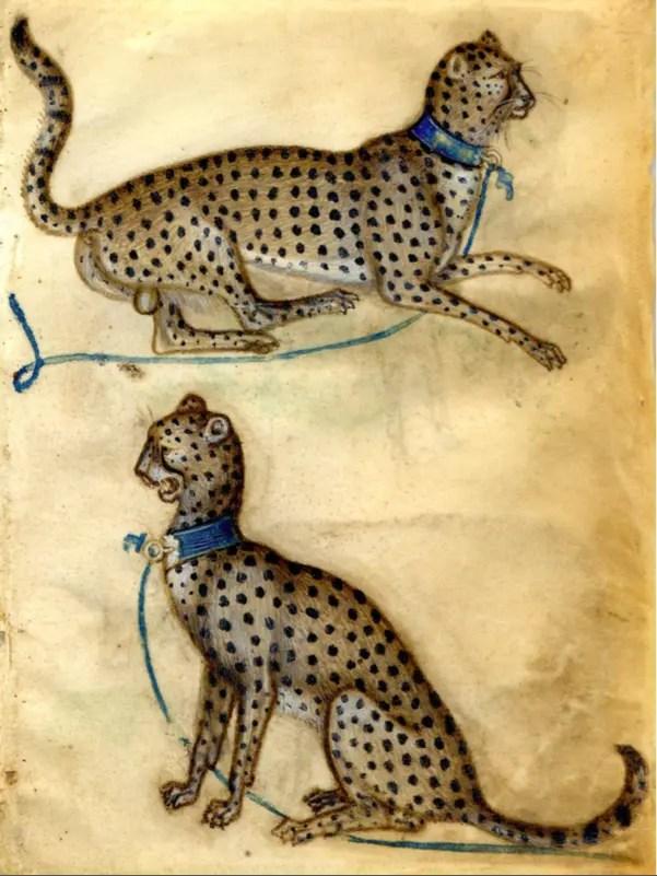 Deux études de guépard (Peinture sur velin vers 1400-1410 / Londres, British Muséum)