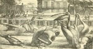 Les animaux exotiques des Rois : de Louis XIV à Napoléon III