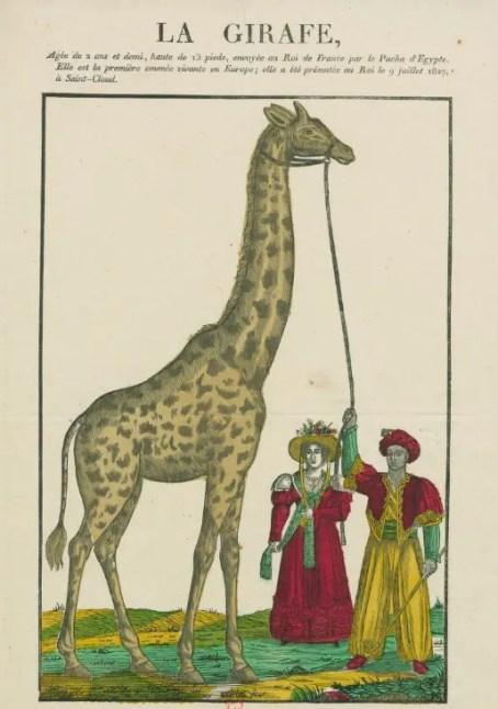 Estampe éditée en 1828 représentant la girafe de Charles X (Gallica BNF)