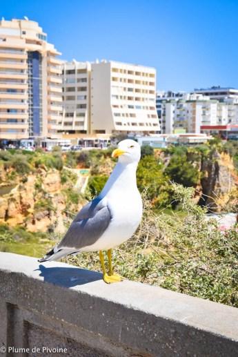 Algarve J2-41