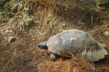 Une tortue sauvage