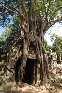 tree-eating-temple