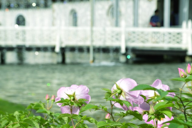 キラキラ橋を見つめる花 この日は曇りでイマイチきらきらんじゃないけど