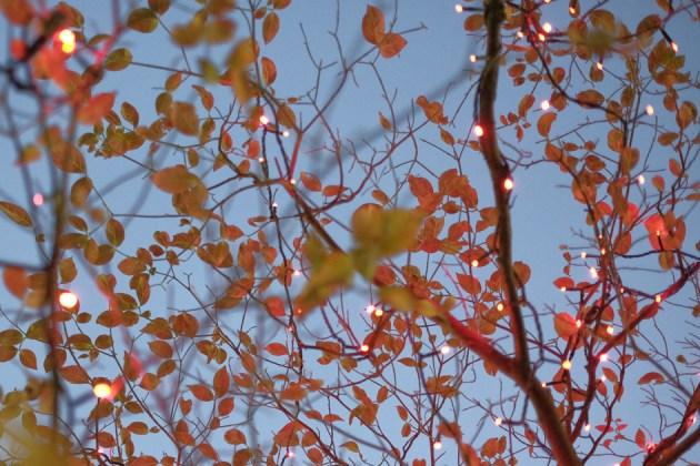 街路樹とイルミネーション 赤いライトが葉を照らす