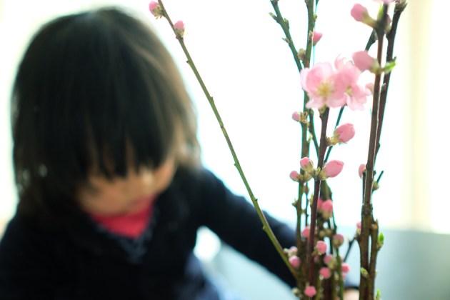 桃の花 ひなまつりの娘