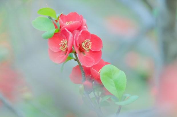 ビビッドなのにふんわり 赤い花