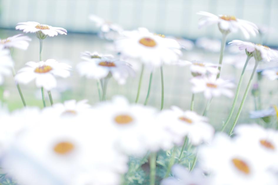 幻想の世界にやってきた ふんわりと白い花
