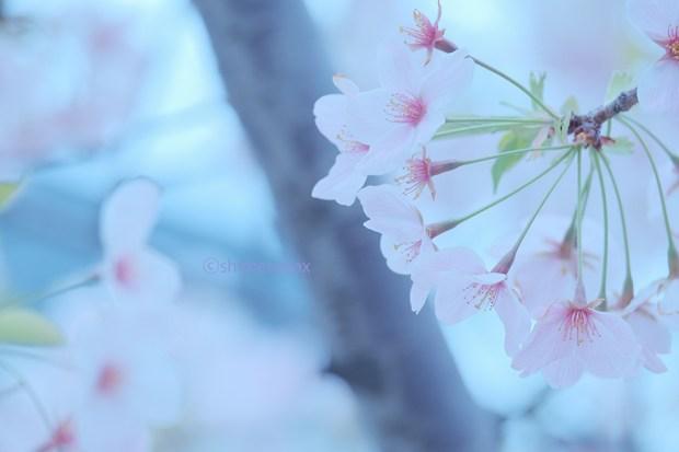 葉桜も悪くない_緑が差し色