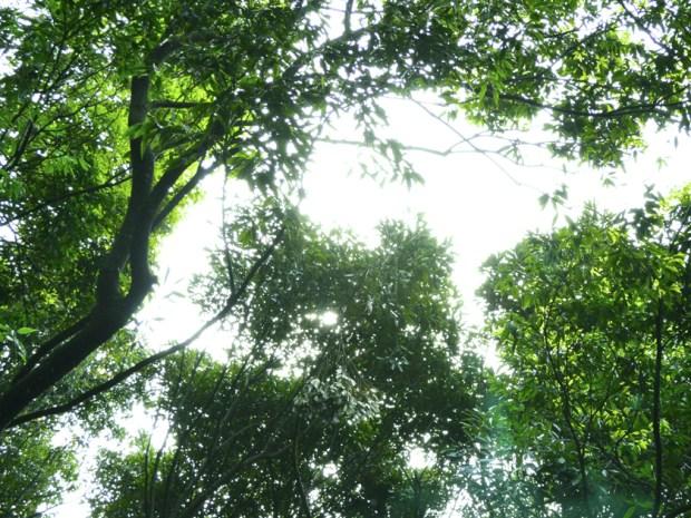 キラキラ光る 新緑