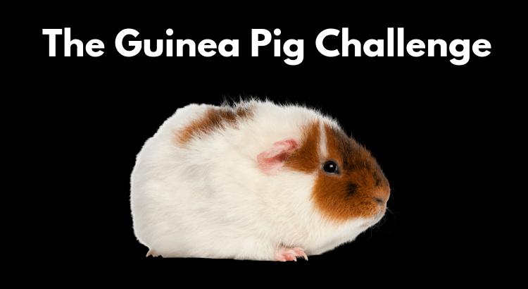guinea pig challenge