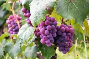 Meilleurs livres sur les vins - livres vins Français