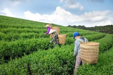 Meilleurs livres sur le thé - livre thé chinois- Meilleur livre sur le thé -