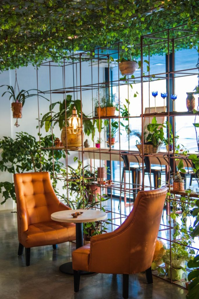 two leather chairs positioned in front of lots of indoor plants
