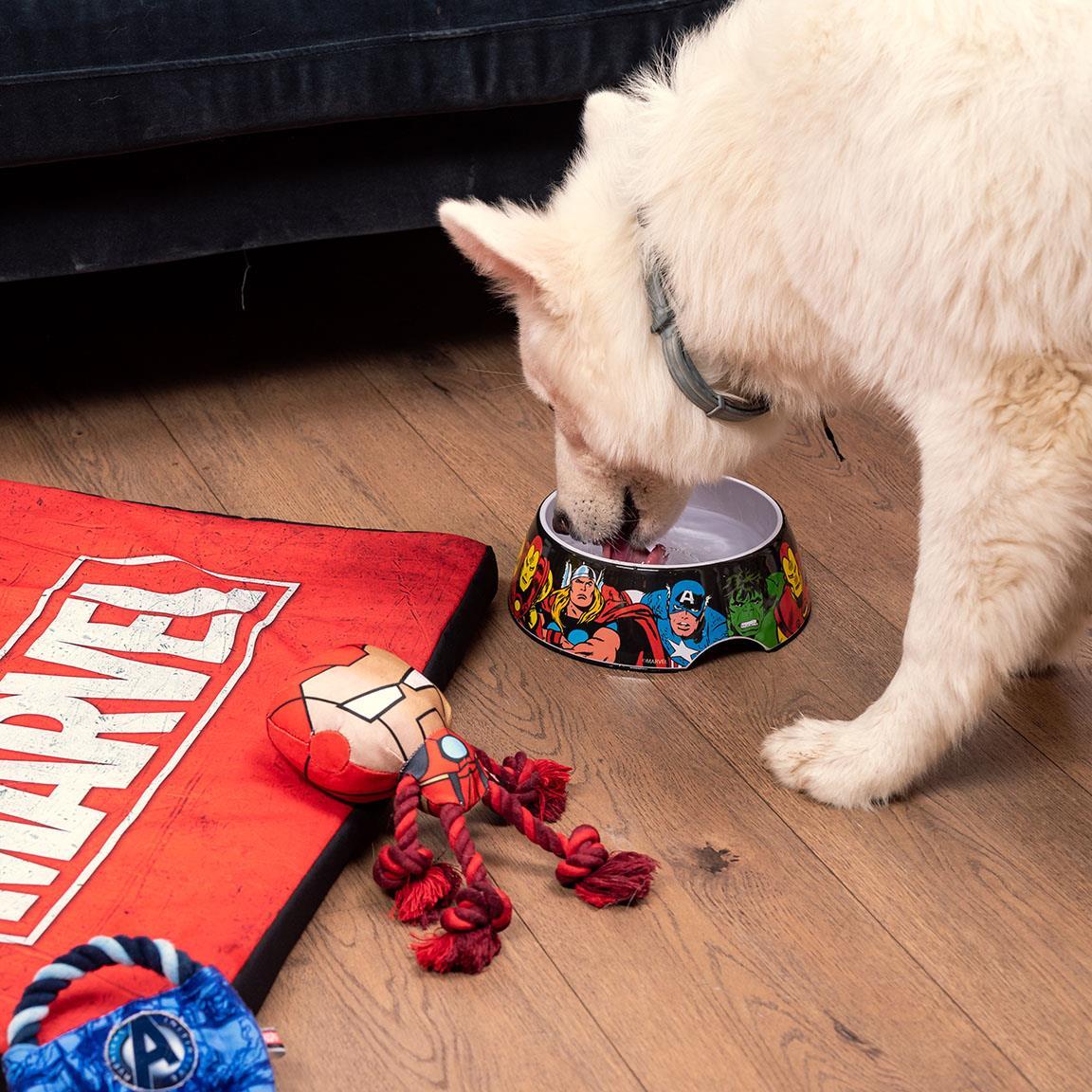 Marvel Feeding Bowl