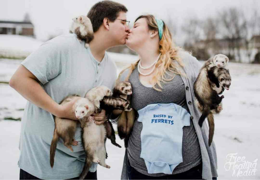 ferret maternity photo shoot